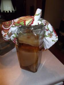 Scoby Hotel for extra kombucha tea SCOBYs