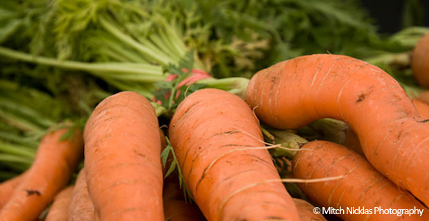 52 Weeks of Bad A** Bacteria – Week 3 – Lacto-Fermented Ginger Carrots