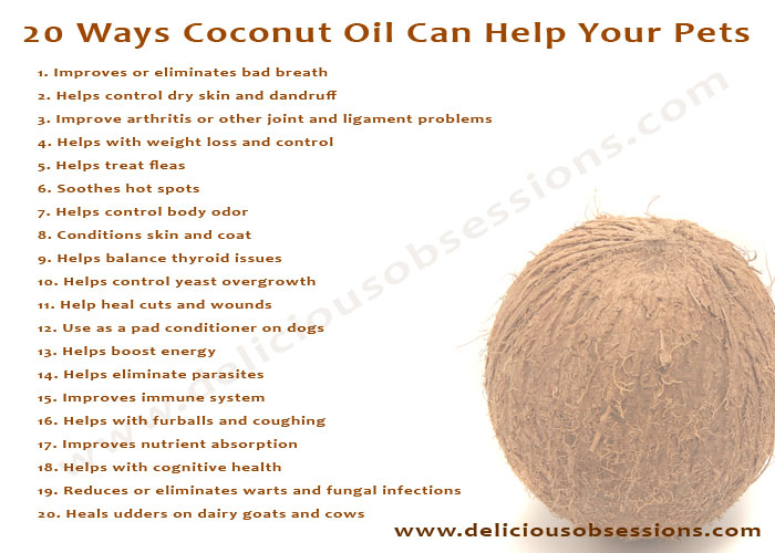Delicious Obsessions: 20 Ways Coconut Oil Can Help Your Pets