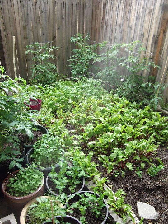 Backyard Farming on an Acre (more or less): A Book Review