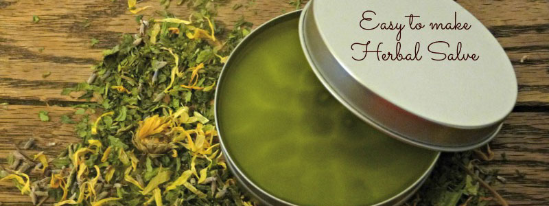DIY Herbal Plantain Salve (Good for Just About Everything!)