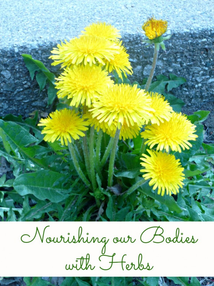 Nourishing Our Bodies with Herbs // deliciousobsessions.com #herbs #herbalremedies #naturalremedies