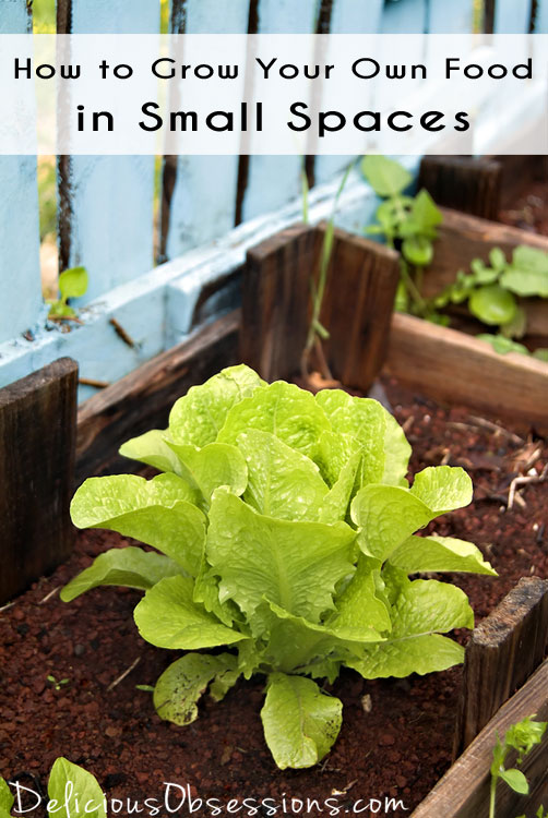 How to Grow Your Own Food in Small Spaces // deliciousobsessions.com