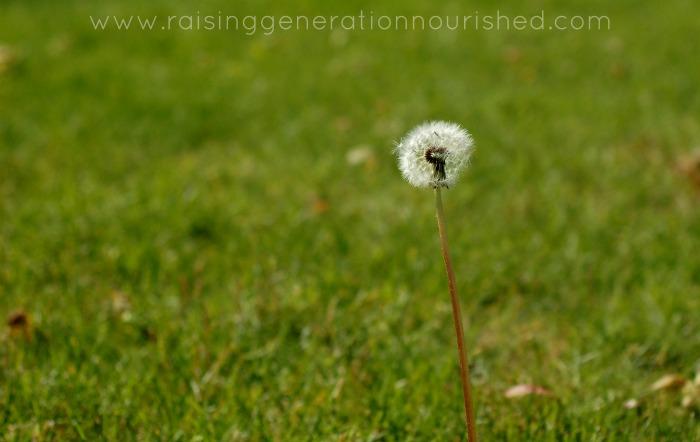 Reversing Seasonal Allergies Through Addressing Gut Health