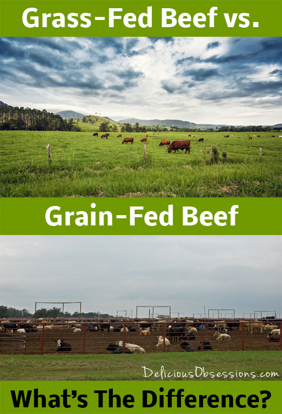 Grass-Fed vs Grain-Fed Beef – What's The Difference? // deliciousobsessions.com #grassfed #grainfed #beef #realfood #sustainable