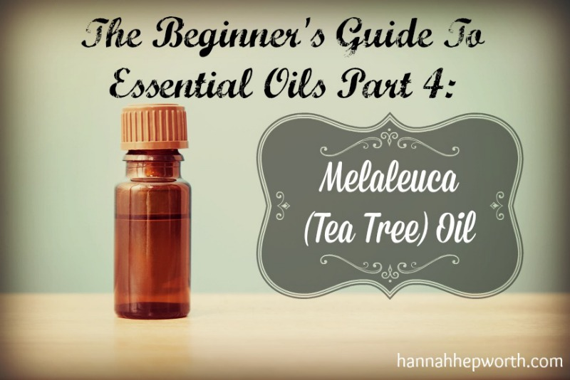 The Beginner's Guide To Essential Oils Part 4: Melaleuca (Tea Tree) Oil